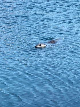 vancouver sea life